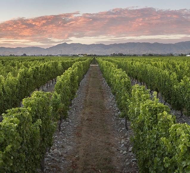 stoneleigh vineyards