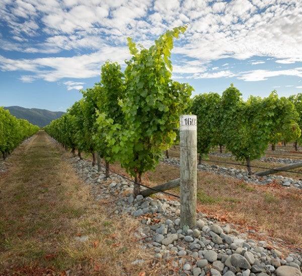 Stoneleigh Vines