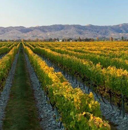 Stoneleigh Vineyards Afternoon (1)